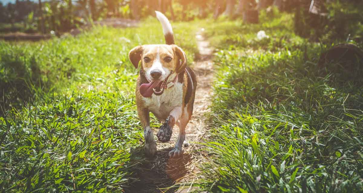 wandelen met de hond